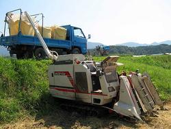 刈り取った籾