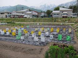 苗植え・種まき