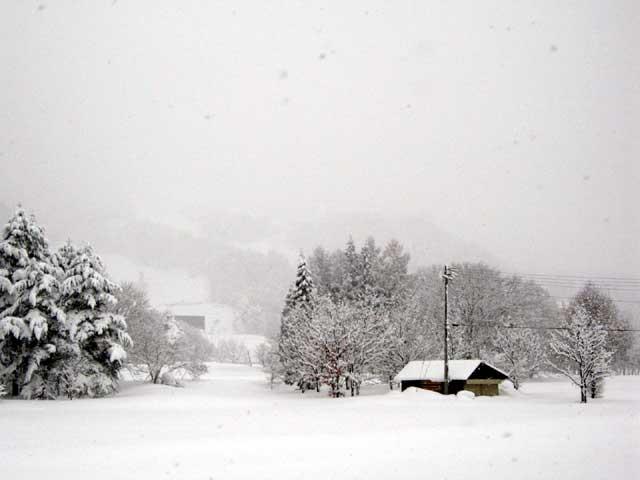 久々の大雪です