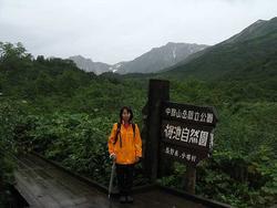 雨の栂池自然園