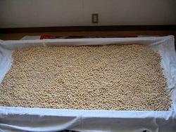 醤油麹造り −大豆と小麦を混ぜる−